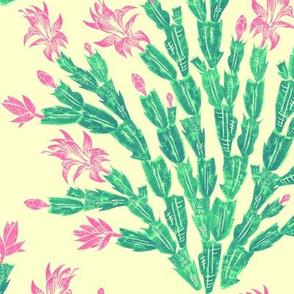 summer-blooming Christmas cactus damask