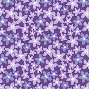 Plumeria - Purple