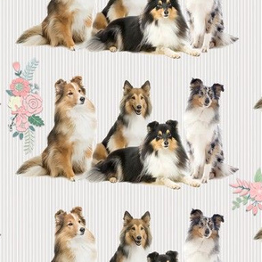 Shelties and Flowers