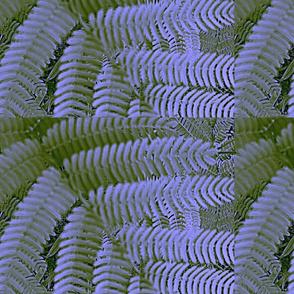 close_up_of_Mimosa_tree-ed-ed-ed