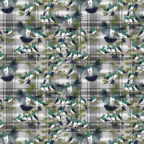 Kereru on grey plaid