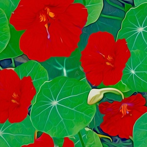 RED Nasturtium blossoms