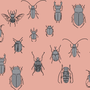 beetles in black and grey on peach