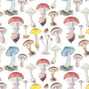 Mushrooms and Toadstools Ditsy