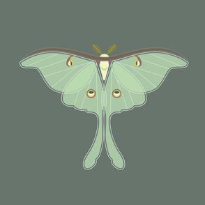 Luna Moth panel