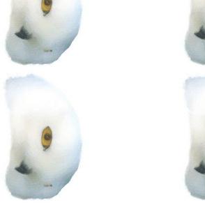 Snowy Owl, Border