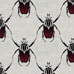 Beetle Lattice on Linen