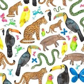Rainforest, Jungle Animals