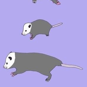 opossumtrio