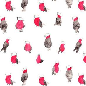 galah bird-watercolor