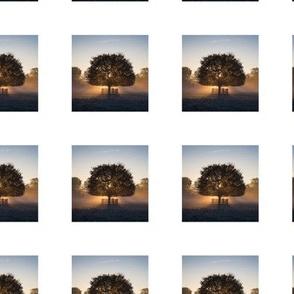 PH_BC_1_Back lit maple tree at sunrisenrise