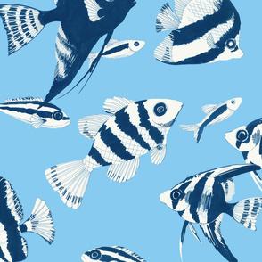Reef fish (blue)