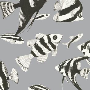 Reef fish (grey)