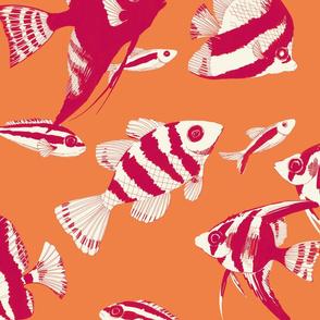 Reef fish (orange)