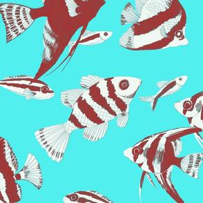 Reef fish (torquoise)