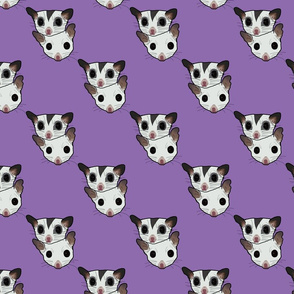 Two sugar gliders on purple background
