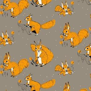 squirrels orange