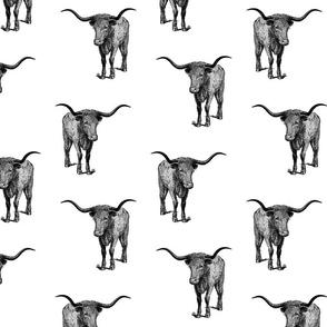 Western Texas Longhorn Bull (large version)