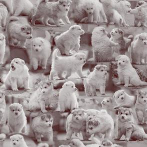 Loitsu-Mono Puppies