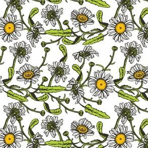 flower Beautiful vintage black daisies seamless pattern on white background. illustration