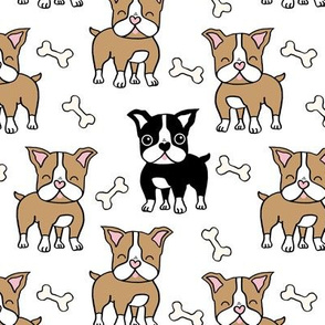 Boston Terrier brown and black on white