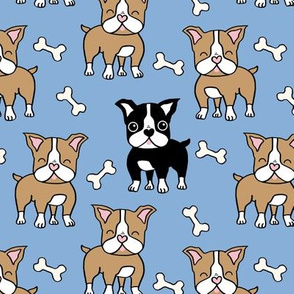 Boston Terrier brown and black on blue