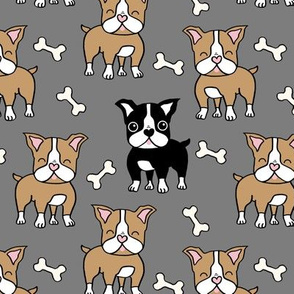 Boston Terrier brown and black on grey