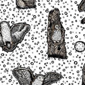 Owls at Dawn  White