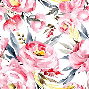 Watercolor light pink peonies peony on white background