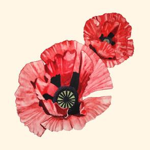 Watercolor Poppy on Cream