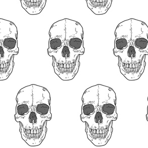 Human Skull // Large // White