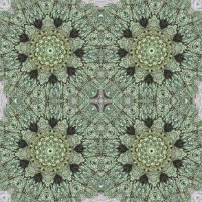 Pale Green Lichen Pinwheels 1142