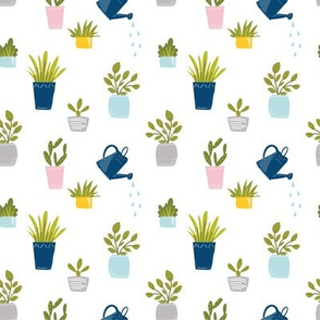Potted Plants and Succulents