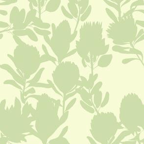 protea lime -uni