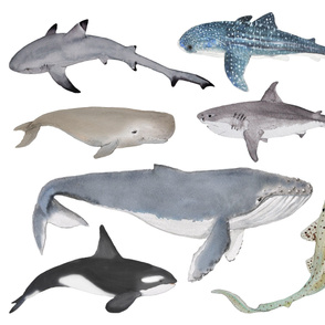 whales and sharks (large)