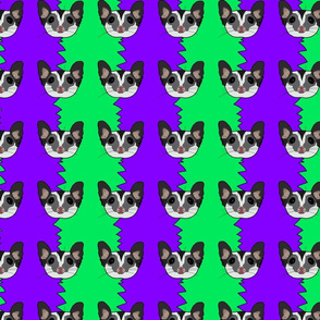 Black beauty sugar glider on green and purple background