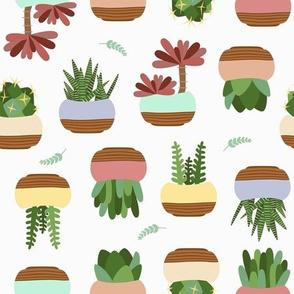 Succulent - Cream