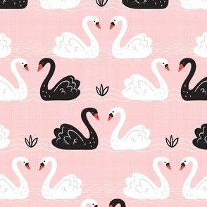 White + Black Swans on Pink