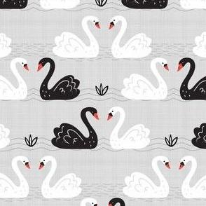 Black + White Swans on Gray