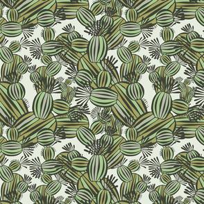 decorative cacti