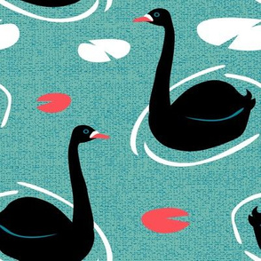Australian Black Swans (blue water) by Mount Vic and Me