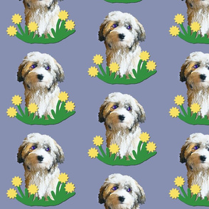 Havanese and Spring Flowers