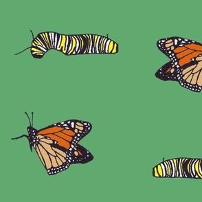 monarchscolorpattern
