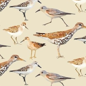 Lots of Little Sand Pipers Watercolor