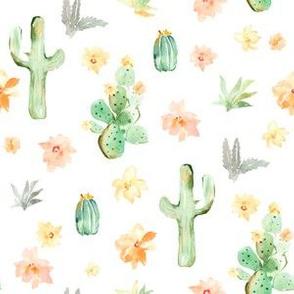 Arizona Cactus on White