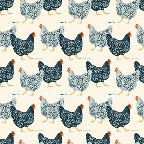 farmhouse chickens C-01