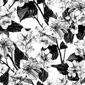 Jasmine flowers pattern