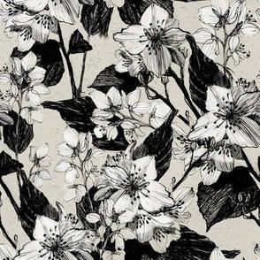 Jasmine flowers vintage