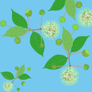 2941 Australian Buttonbush Blue Light