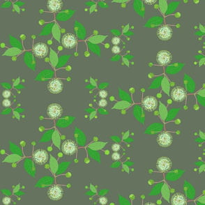 2941 Australian Buttonbush Green Grey